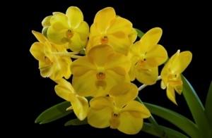 """Удобрение МЕРА """"для Орхидей универсальное стимуляция цветения"""" 0,25л"""