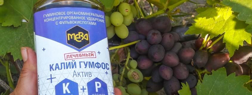 Для сладких и сочных ягод винограда.